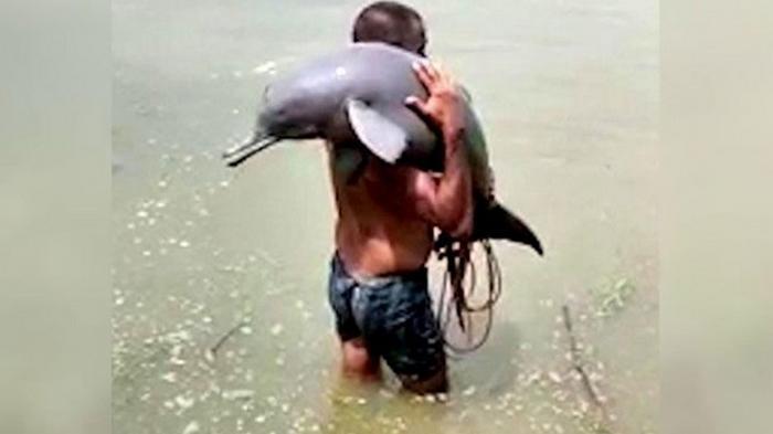Рыбак спас редкого дельфина
