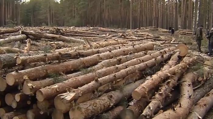 В ООН озвучили масштабы вырубки леса за 30 лет