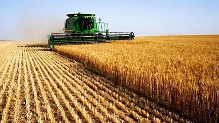 Украинцам рассказали, как стать владельцем земельного пая