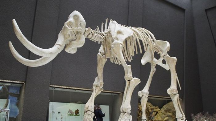 Найдены полностью сохранившиеся останки мамонта