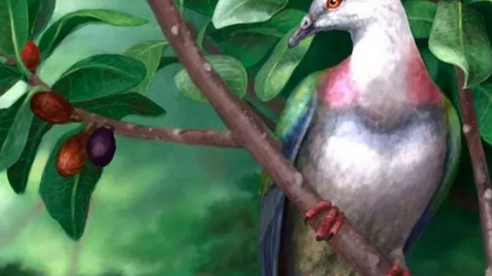 На островах Тонга нашли останки полуметрового голубя