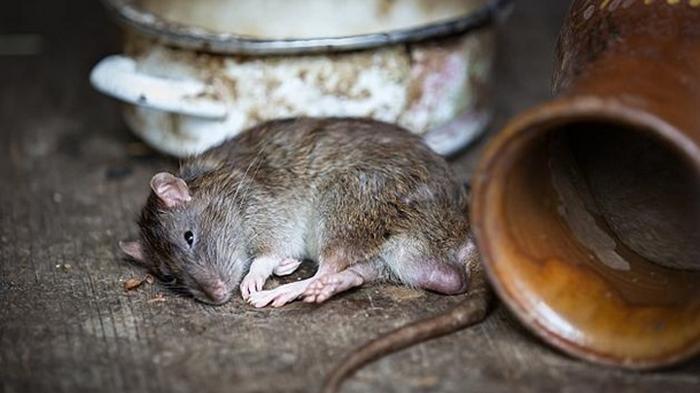В Китае от чумы умер человек, десятки контактных