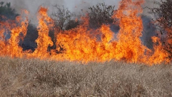 Под Киевом в сгоревшей траве нашли тело мужчины