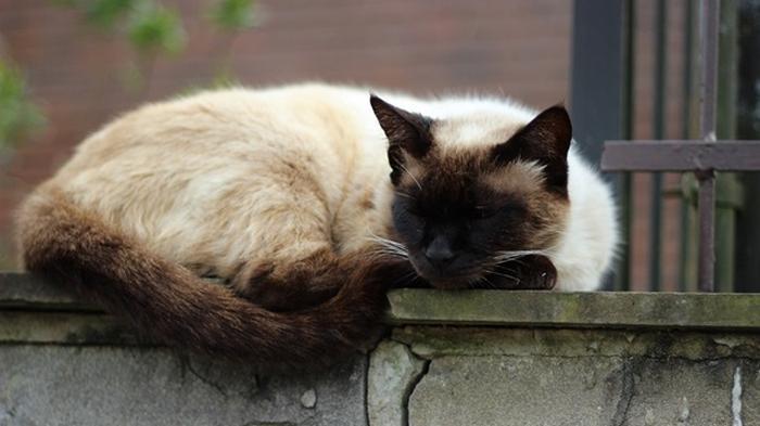 В Англии пропавшего кота нашли спустя шесть лет
