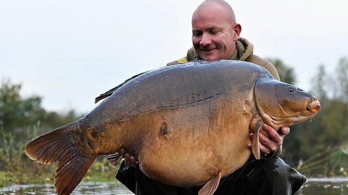 Рыбак поймал самого большого карпа-рекордсмена в Великобритании: фото