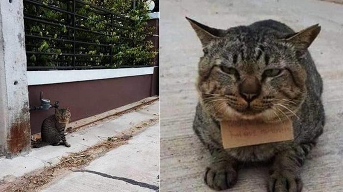 Пропавший на трое суток кот вернулся в долгах