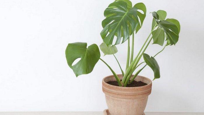 Флорист назвал опасные для человека домашние растения