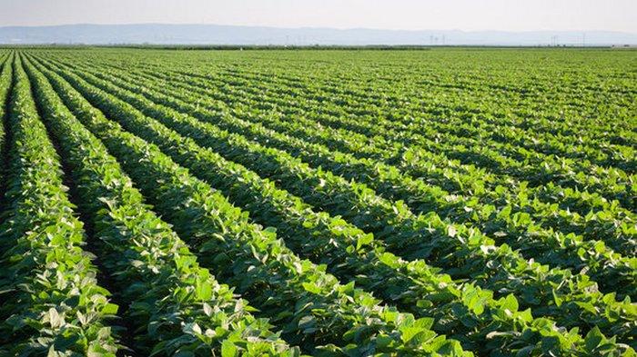 Как 5G помогает бразильским фермерам повышать урожайность