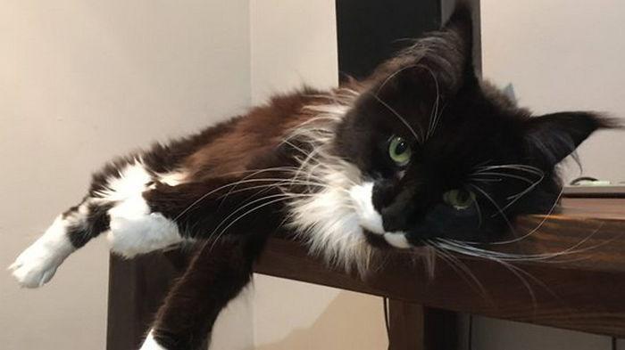 Вооруженный австралиец захватил приют в поисках кошки