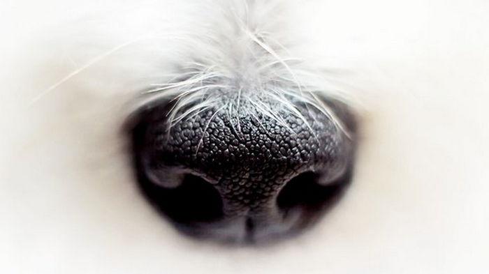 Забота о питомцах. США условно одобрили первое лекарство в таблетках против рака у собак