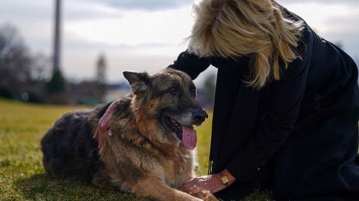 Супруги Байден переехали в Белый дом с собаками (фото)