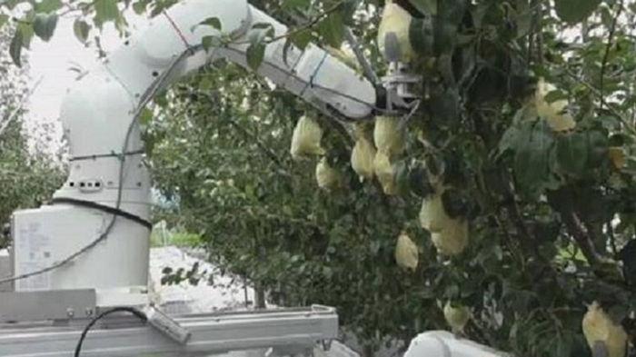 В Японии создали робота-фермера (видео)
