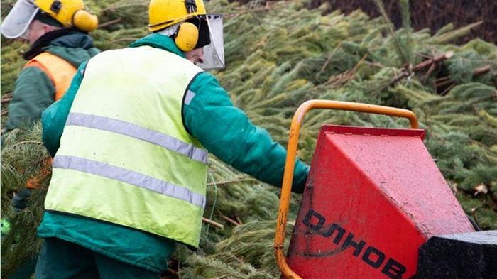В мэрии Киева рассказали, что делают с собранными новогодними елками