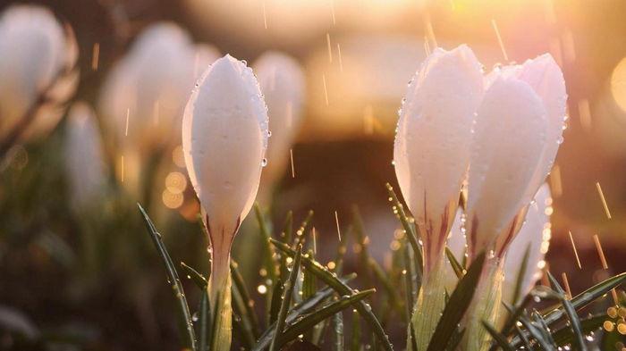 7 марта: какой сегодня праздник, приметы дня и что нельзя делать