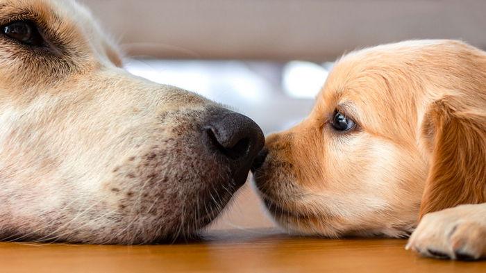 В Украине собак научили выявлять больных COVID-19: как это работает