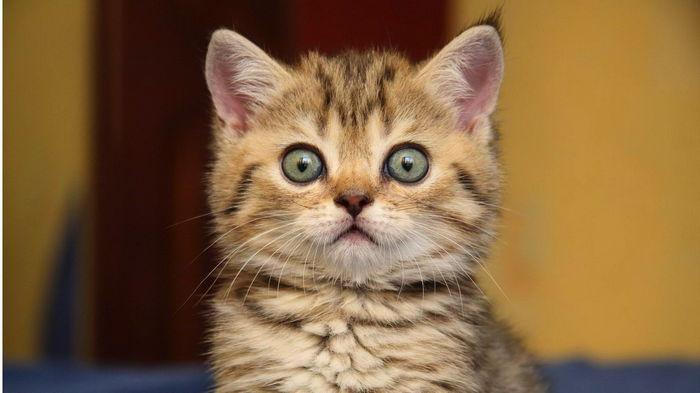 Забирают последнюю радость. Нейросети научились создавать снимки котиков