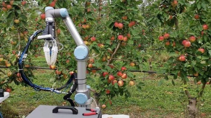 В Австралии создали робота для сбора урожая яблок (фото)