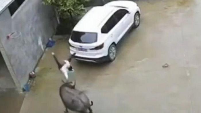 В Китае бык напал на мальчика (видео)