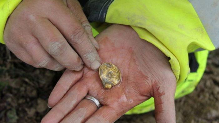 Жертва богам. В Норвегии нашли семь древних золотых украшений
