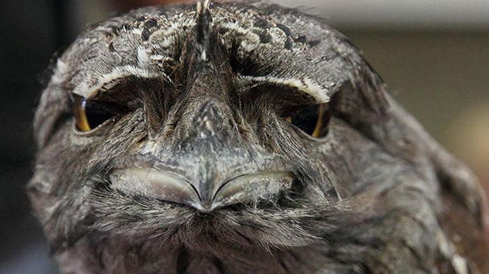 Что ты такое? Биологи назвали самую популярную в Instagram птицу