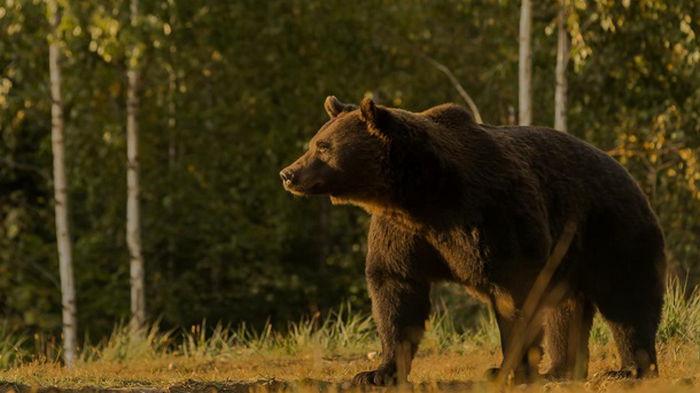 Принца Лихтенштейна обвинили в убийстве самого крупного медведя в ЕС