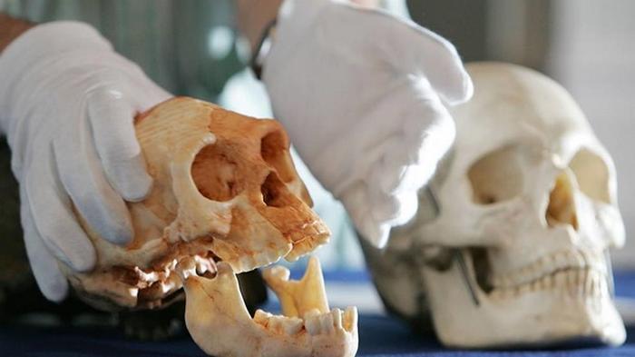 Найдены самые древние следы Homo sapiens в Европе