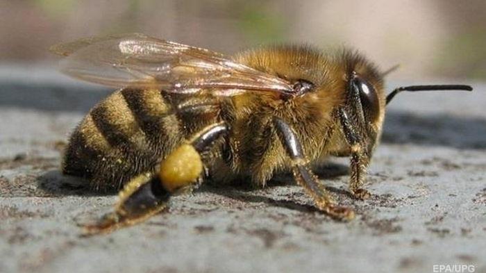 В Ровенской области мужчина умер от укусов пчел