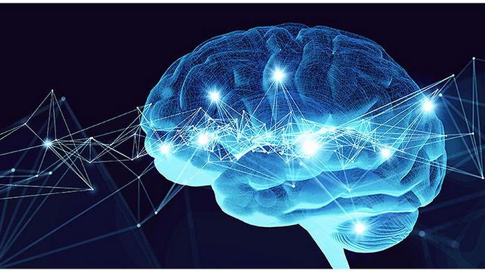 Google создал самую детальную карту человеческого мозга