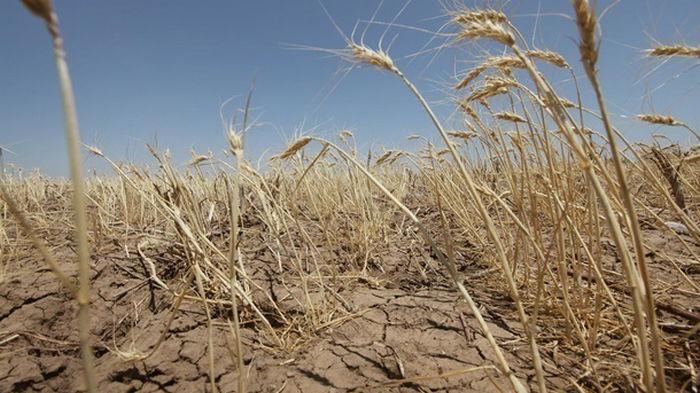 Украина переходит в зону сверхвысоких температур и погодных катаклизмов