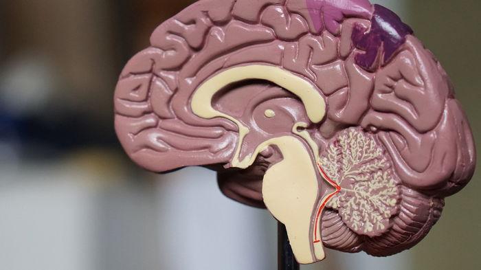 Антибиотики изменяют структуру мозга