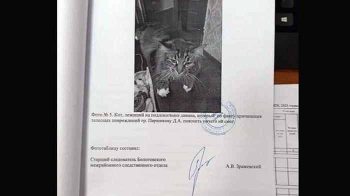 Пояснить ничего не смог: в РФ свидетелем по уголовному делу стал кот