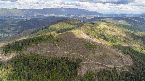 Стало известно, как в Украине будут высаживать миллиард деревьев